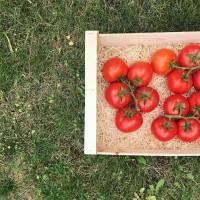 3 grappes de tomate / 2kg
