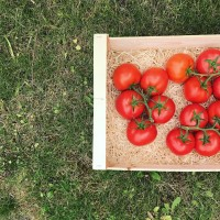 1kg x Tomate Grappe NANTAISE