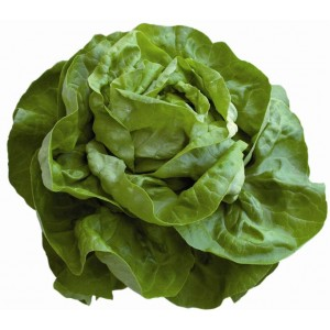 Salade Laitue BIO /  1 pièce