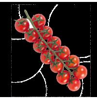 Tomate cerise BIO / 250g