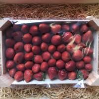 fraises 1kg - madisfrais.com