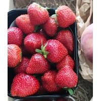 Barquette de fraise Cléry / 500g