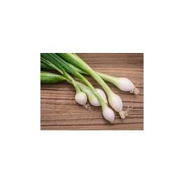Oignon Blanc / 1 botte
